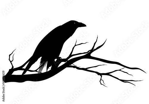 czarny-kruk-ptak-siedzacy-na-galezi-drzewa-halloween-tematu-wektor-sylwetka