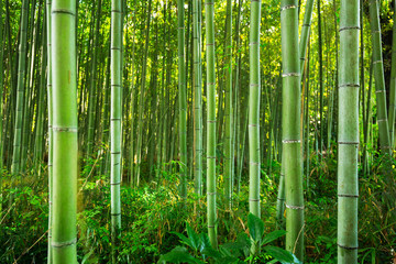 Panel SzklanyBamboo forest of Arashiyama near Kyoto, Japan