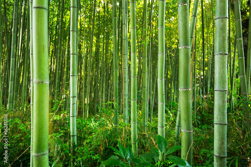 Montage in der Fensternische Bambus Bamboo forest of Arashiyama near Kyoto, Japan