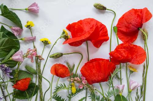 In de dag Poppy Nature background with beauty wild flowers on white.