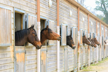 Horses In Stable, Boxes, Riding School