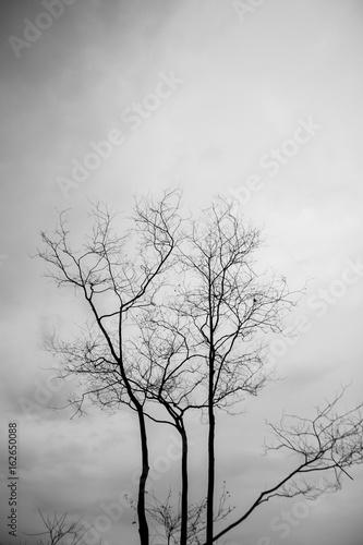 smutne-drzewo