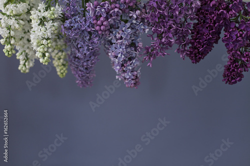 Lilac flowers in various shades of purple