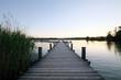 Steg am Starnberger See mit Schilf