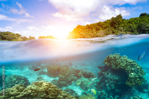 Poster Coral reefs Design templates with underwater parts and coral