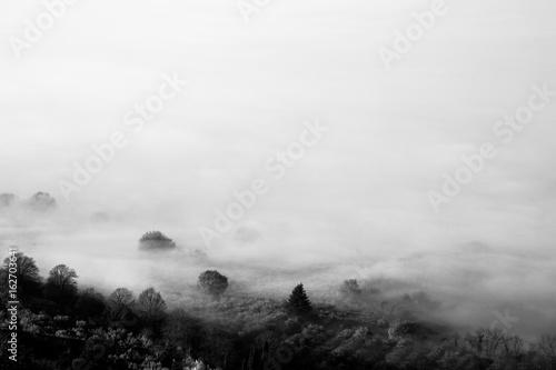 Plakat Mgła pokrywająca niektóre drzewa i prawie cały obraz
