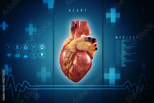 3d Anatomy of Human Heart - Buy this stock illustration and explore ...