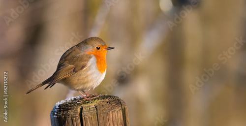 Printed kitchen splashbacks Natuur Sad Robin