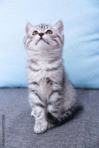 Foto op Aluminium Kat A kitten sits looking up. Striped Gray Kitty