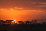 Fototapeta Sawanna - African sunrise. Amboseli, Kenya