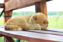 Ginger Cat Sleeps On A Wooden Bench In Summer