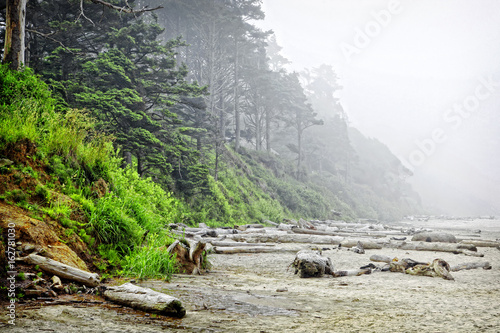 Foto op Plexiglas Kust Arcadia Beach in Morning Fog