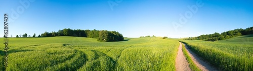 Foto op Plexiglas Weide, Moeras Green field and clear blue sky panorama
