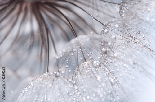 Abstract photo of a dandelion with water drops. Selective focus