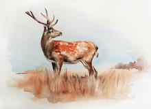 Deer In The Field - Watercolor...