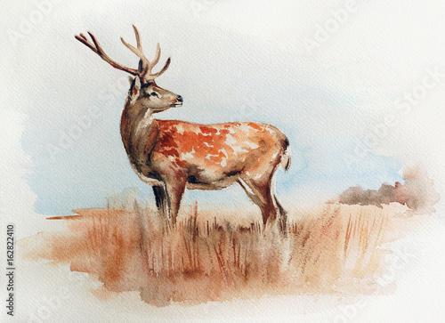 deer-in-the-field-watercolor