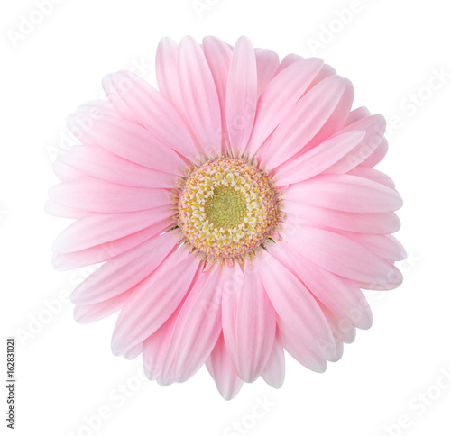 Photographie Light pink gerbera flower isolated on white background.