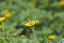 Yellow Flower, Natural Summer ...