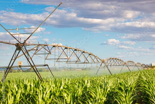 Cuadros en Lienzo  irrigation pivot