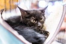 Portrait Of One Black Tiny Kit...