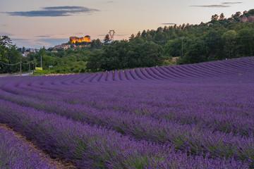 Fototapeta na wymiar Champ de lavande. Vue sur le Château de Gréoux-les-Bains, Provencee, France.