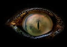 Crocodile Eye Macro - Detailed...