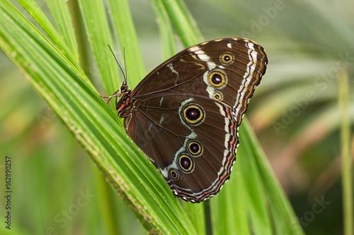 Fotografie, Obraz  Tropical butterfly