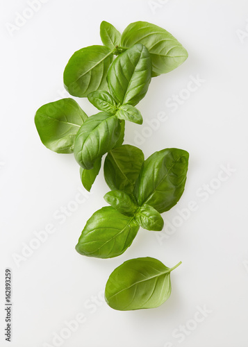 Freshly picked bunch of basil Canvas Print