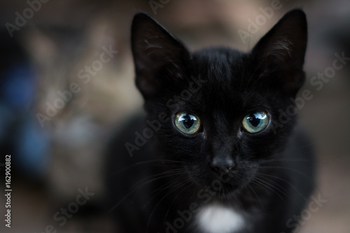 Fotografija Close up view of a black cat's face