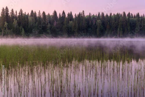 Tuinposter Purper lake dawn pink fog forest