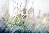 Selective focus on lavender flower - lavender flower in my flower garden - 162902054