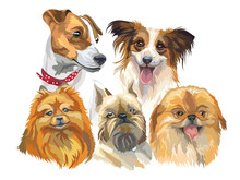 Set Of Small Dog Breeds