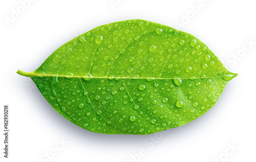 Green leaf with drops of water on the white background