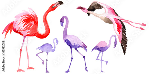 Canvas Prints Flamingo Bird Sky bird flamingo in a wildlife by watercolor style isolated. Wild freedom, bird with a flying wings. Aquarelle bird for background, texture, pattern, frame, border or tattoo.
