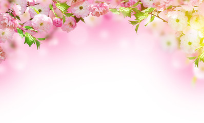 FototapetaFlowers background with amazing spring sakura with butterflies. Flowers of cherries.