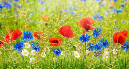 Fototapeta Maki sommerwiese, wiesenblumen, sommerblumen