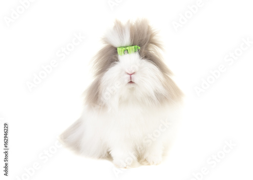 Photo Pretty long haired angora bunny seen from the front wearing a green bow isolated
