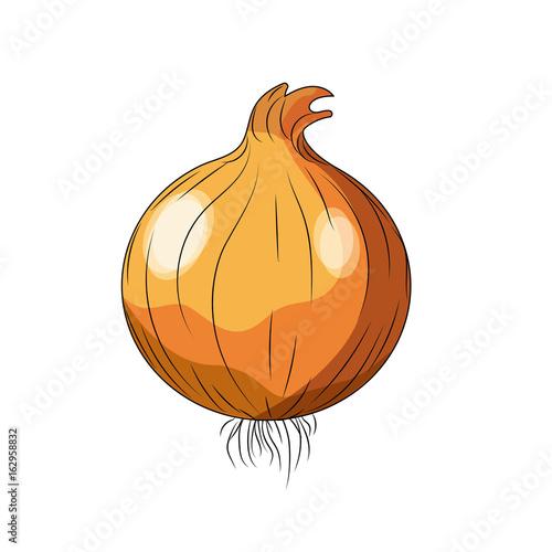 Fototapeta fresh onion natural vegetable nutrition obraz