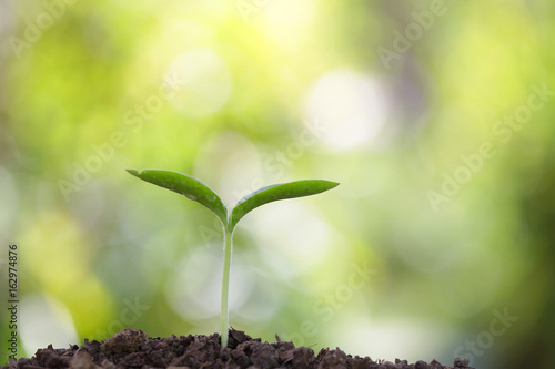 Poster Printemps Growing sprout