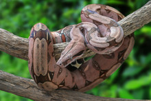 Beautiful Pink Skin Snake From...