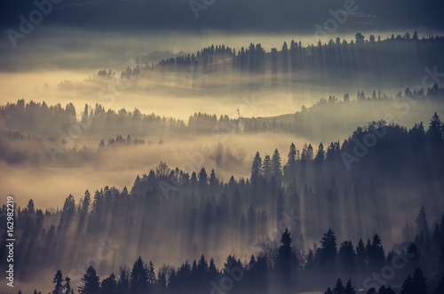 Poster Ochtendstond met mist Misty forest landscape, panorama of Carpathian mountains in Poland