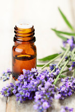 Lavender Essential Oil In The Amber Bottle, With Fresh Lavender Flower Heads.
