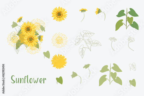 Valokuva  Vector Illustration Yellow Sunflowers
