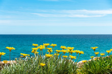 Yellow Flowers With Blue Sea Water And Sky