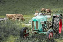 Old Tractor On Meadow. Beautif...