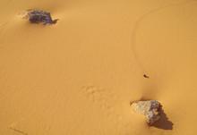 Tiny Footprints