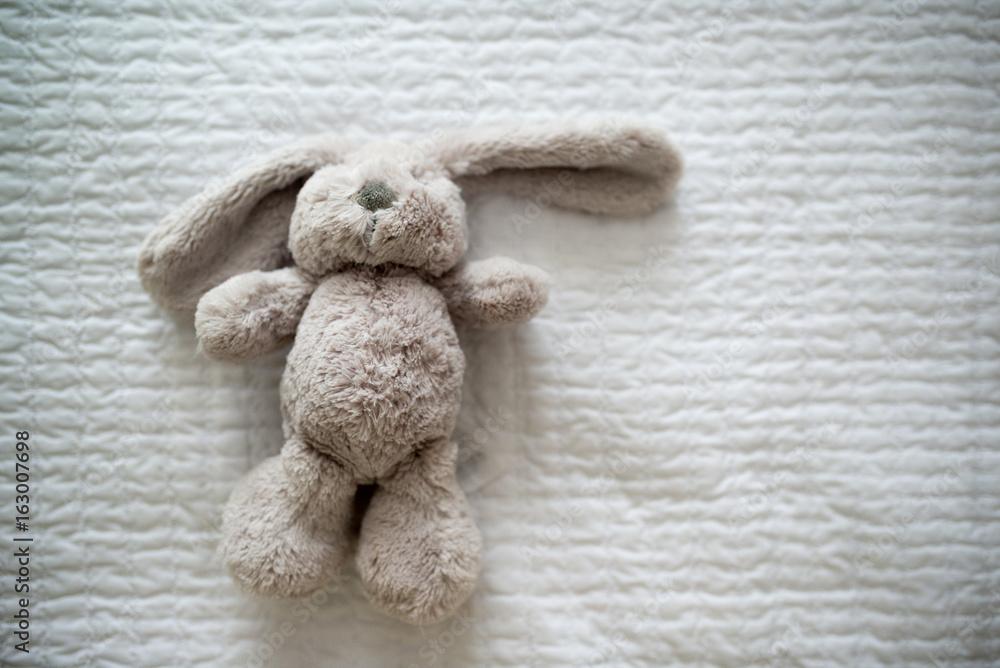 Fototapeta coniglio peluche