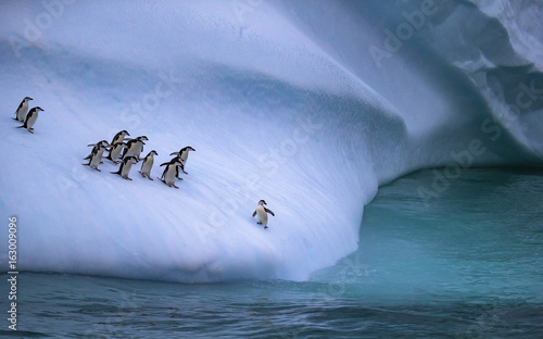 Spoed Foto op Canvas Pinguin The colony of penguins approaches the water. One penguin stands on the slope of the iceberg near the water. Andreev.
