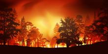 Feu - Pompier - Incendie - Feu De Forêt - Incendie De Forêt - Catastrophe