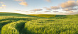 Leinwandbild Motiv Green, spring field, panorama